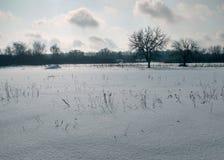 winter wiejski krajobraz Opad śniegu, drzewa, wysoka sucha trawa Fotografia Stock