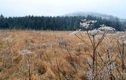 Winter-Wiese, West Virginia Stockfotografie