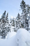 Winter wild forest Stock Image