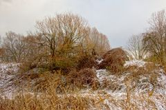 Winter wilderness with bare trees and shrubs in the snow. In Bourgoyen nature reserve, Ghent Royalty Free Stock Images