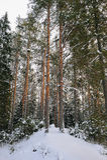 Winter in the wildwood. Stock Photo