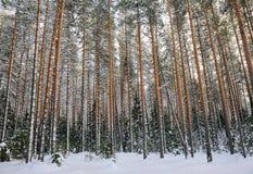 Winter in the wildwood. Stock Image