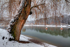 Winter willow Stock Photography