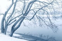 Winter willow on river Royalty Free Stock Photos