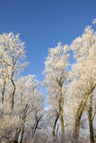 Winter willow trees Stock Photos