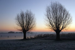 Winter Willow trees Stock Images