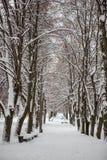Winter, Winterstadt, Winter im Park, Schnee, Frost, Kälte, Schneesturm lizenzfreie stockfotografie