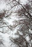 Winter, Winterstadt, Winter im Park, Schnee, Frost, Kälte, Schneesturm lizenzfreies stockbild