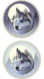 Winter wolf. Vector illustration - winter wolf in the circle Royalty Free Stock Images