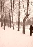 Winter. Woman walking in winter park royalty free stock image