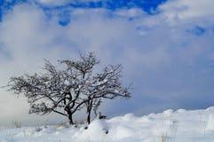 Winter wonder Stock Image