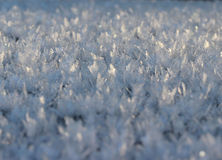 Winter wonder background Royalty Free Stock Photos