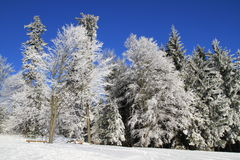 Winter wonder land Stock Photography