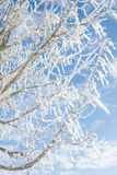 Winter wonder land - iced branches Stock Photo