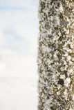 Winter wonder land - iced tree trunk Royalty Free Stock Images