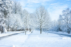 Winter wonder land - in the park Royalty Free Stock Photo