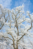 Winter wonder land - snow tree Stock Photography