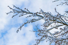 Winter wonder land - snowy branches Stock Photography