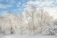 Winter wonder land - snowy trees Stock Photo