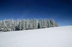 Winter wonder world. Clear blue sky and white white winter Stock Photos