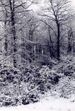 Winter Wonderland. Snow on Trees Stock Images