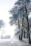 Winter wonderland. First frost of winter covering trees and grass Royalty Free Stock Image