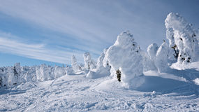 Winter wonderland. Mountain scene with blue sky - snow ghosts typical of rime snow Stock Photos