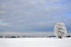 Winter Wonderland. Hoarfrost has turned upper bavaria in a winter wonderland royalty free stock photo