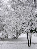 Winter Wonderland. Beautiful snow colvered trees Royalty Free Stock Image