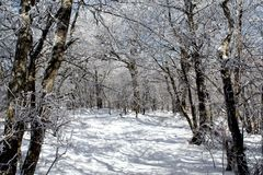 Winter Wonderland. A snow covered pathway through the mountains Royalty Free Stock Image