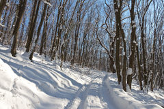 Winter wonderland. Somewhere in the forest park Shumen Plateau Stock Images