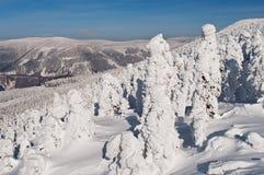 Winter Wonderland Stock Photography