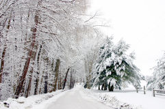 Winter Wonderland. Snowy country scene Royalty Free Stock Photos