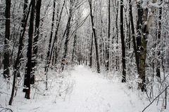 Winter Wonderland. Wooded path after snowstorm in winter royalty free stock image