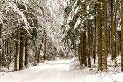 Free Winter Wonderland Stock Images - 49697934