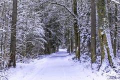 Free Winter Wonderland Royalty Free Stock Images - 49700739