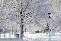 Winter wonderland. Winter park Stock Image