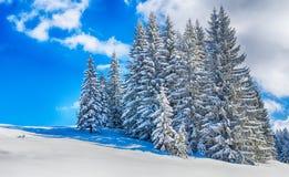 Free Winter Wonderland Stock Photo - 68850920