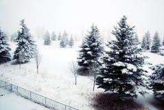 Winter Wonderland. Foggy winter wonderland snow scene in Calgary Alberta stock images