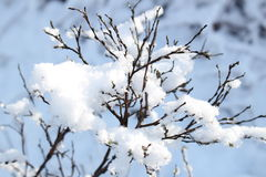 Free Winter Wonderland  Royalty Free Stock Image - 84714996