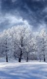 Winter Wonderland. A premade background for artists to use in their artwork and design Royalty Free Stock Images