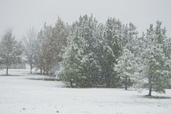 The Winter Wonderland In Alabama. A beautiful winter wonderland in Alabama during a snowstorm in December with snow covered trees stock photo