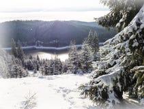 Winter wonderland amazing,snow background Royalty Free Stock Photography