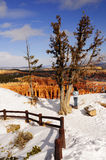 Winter wonderland at Bryce Canyon NP. A hiker enjoys beautiful scene at Bryce Canyon National Park in winter Stock Photography
