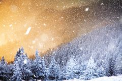 Winter wonderland - Christmas background with snowy fir trees in. Winter wonderland -Christmas background with snowy fir trees in the mountains stock photo