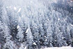 Winter wonderland - Christmas background with snowy fir trees in. Winter wonderland -Christmas background with snowy fir trees in the mountains royalty free stock photo