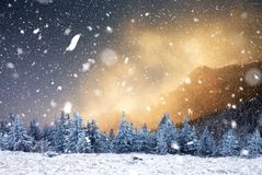 winter wonderland - Christmas background with snowy fir trees in stock photography