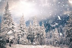 Winter wonderland - Christmas background with snowy fir trees in. Winter wonderland Christmas background with snowy fir trees in the mountains royalty free stock photography