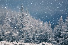 winter wonderland - Christmas background with snowy fir trees in stock photos