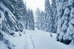 Winter wonderland. Christmas landscape. Winter Wonderland. Snow-covered trees in a mountain forest Stock Photo
